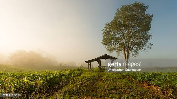 A hut and tree with morning fog light