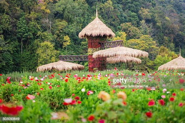 Hut in Doi angkang