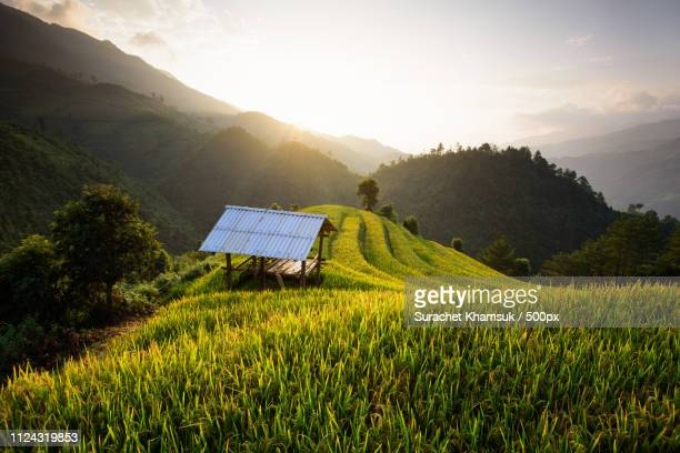 hut with rice terraces - mù cang chải stock pictures, royalty-free photos & images