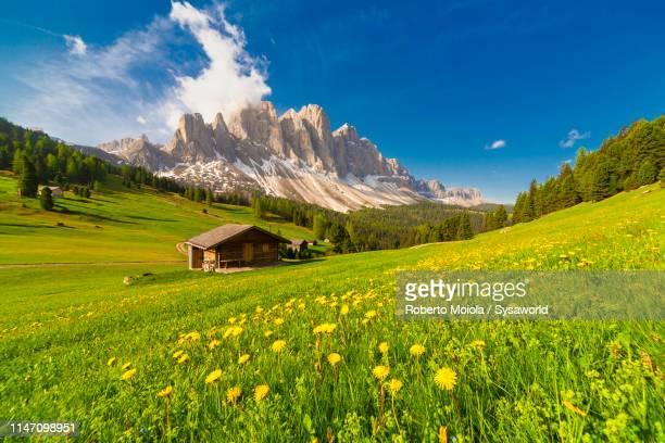 huts in green meadows, malga caseril, funes, italy - ドロミーティ ストックフォトと画像