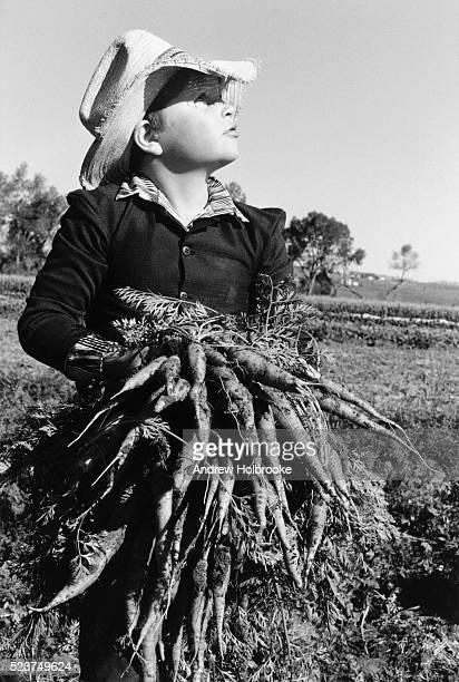hutterite boy with carrots - hutteriter bildbanksfoton och bilder