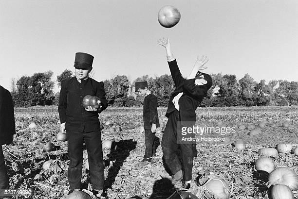 hutterite boys in a pumpkin field - hutteriter bildbanksfoton och bilder