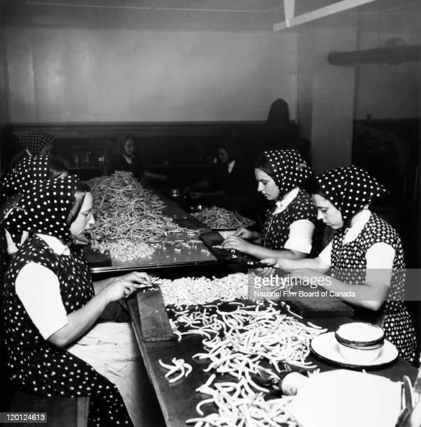 Hutterite women prepare beans in the communal kitchen at the Sturgeon Creek Hutterite Colony near Headingley Manitoba Canada August 1954 Photo taken...