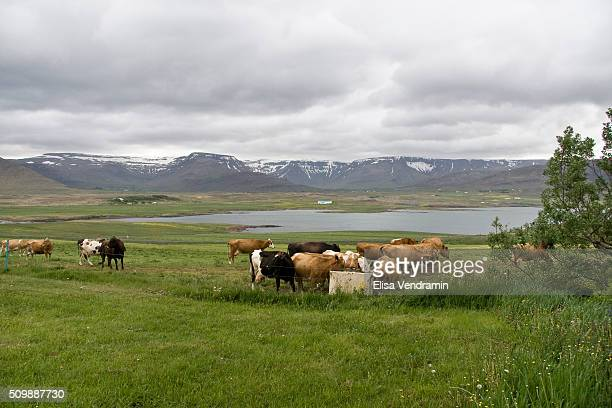 Hvalfjoraur is situated in the west of Iceland between Mosfellsbaer and Akranes