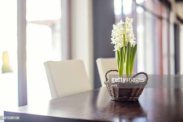 Hyacinth (Hyacinthus orientalis) in basket