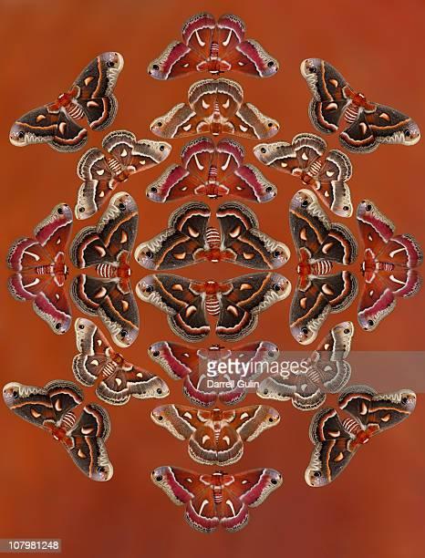 hyalophora silk moths from us in design pattern - papillon de nuit photos et images de collection