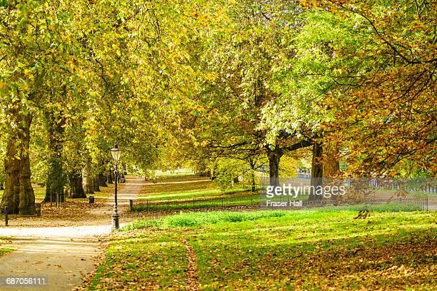 hyde park in autumn, london - ロンドン ハイドパーク ストックフォトと画像
