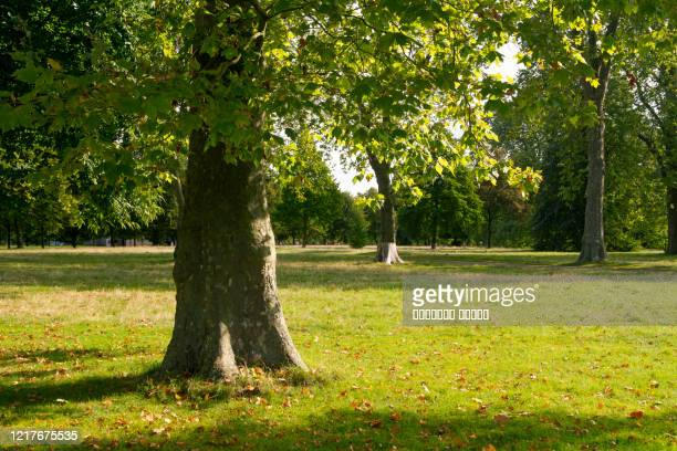 hyde park in the autumn, london - striped stock pictures, royalty-free photos & images