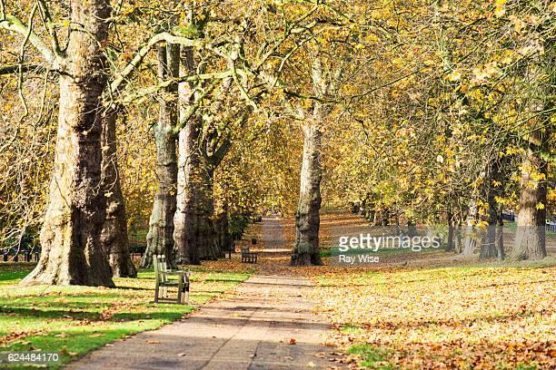 Hyde Park path through trees.