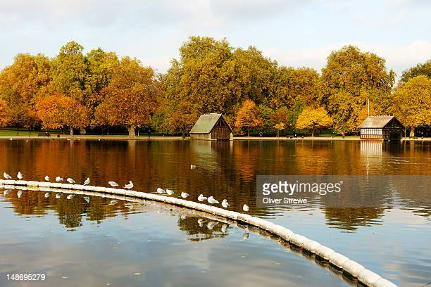 hyde park. - hyde park london stock pictures, royalty-free photos & images