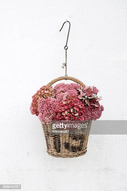 hydrangea and cauliflower mushroom in a basket - hanging basket stock pictures, royalty-free photos & images