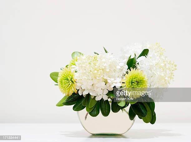 アジザイや菊花静物 - キク科 ストックフォトと画像