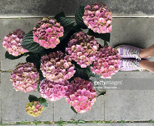 hydrangea flower and matching shoes