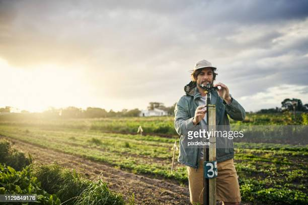 hydrated plants are happy plants - agricultural occupation stock pictures, royalty-free photos & images