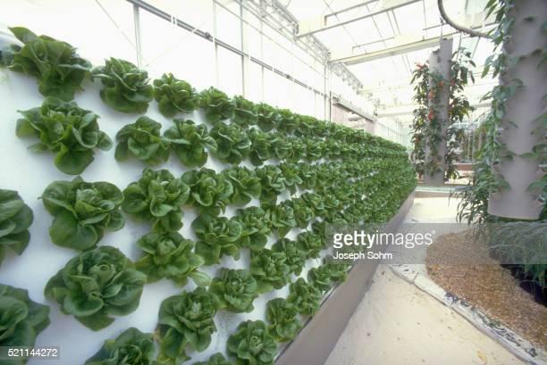 Hydroponic Farming at Epcot Center