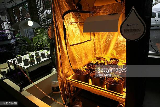 Hydroponic plant growing system is on display in the weGrow marijuana cultivation supply store during its grand opening March 30 2012 in Washington...