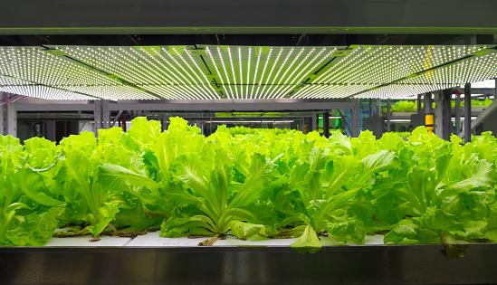 hydroponic system - gettyimageskorea
