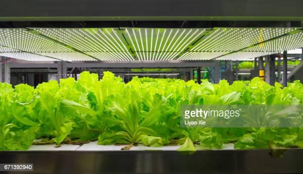 hydroponic system - バイオテクノロジー ストックフォトと画像