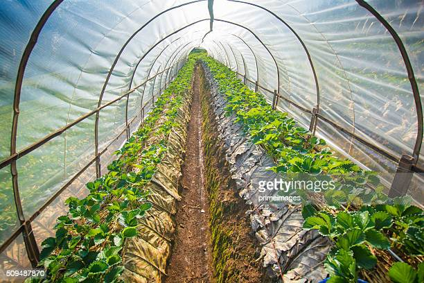 Hydroponic vegetable in a garden.