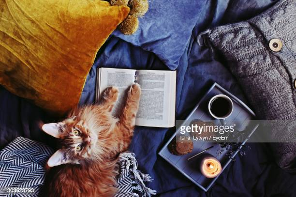 hygge home with cat, blanket, cup of coffee and candles - maine coon cat stock pictures, royalty-free photos & images