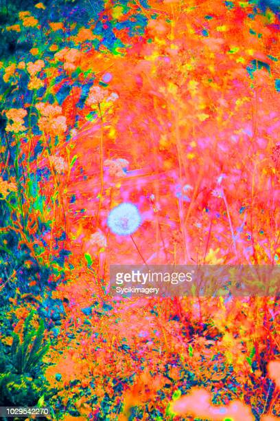 Hyper digital/saturated field with dandelion