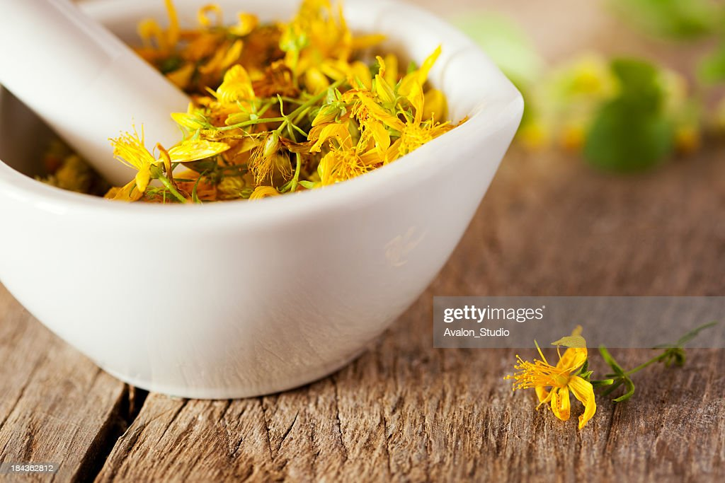 hypericum perforatum : Stock Photo