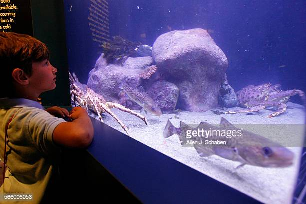 Ian Brown of Santa Monica gets a close–up view of an Alaskan King Crab and other fish during a preview of the new Arctic Antarctic Our Polar Regions...