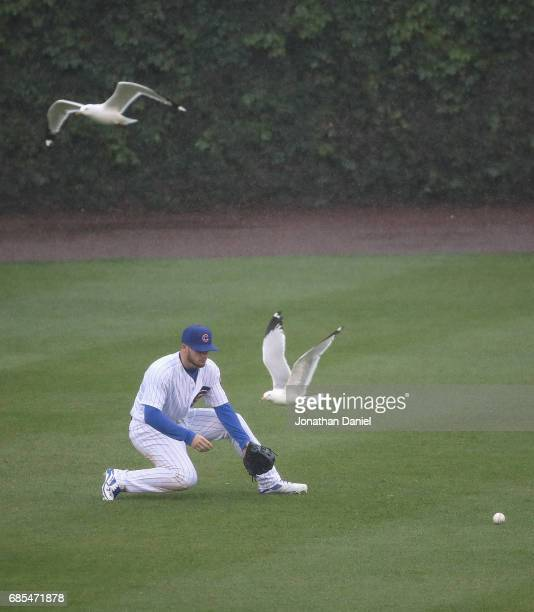 Ian Happ of the Chicago Cubs fields a ball as seagulls fly past against the Milwaukee Brewers in the 5th inning at Wrigley Field on May 19 2017 in...