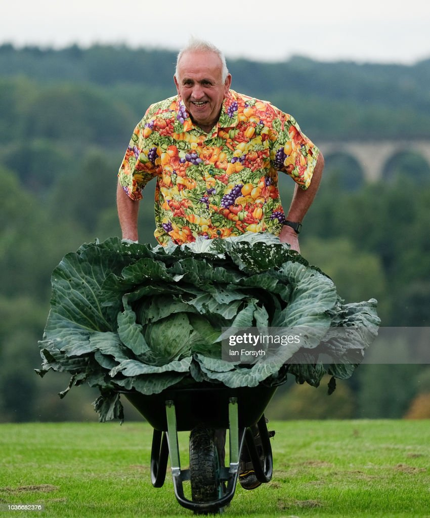 Ian Neale from Newport poses for a media call with his winning cabbage which won with a weight of 30.2kg after judging takes place for the giant vegetable competition on the first day of the Harrogate Autumn Flower Show held at the Great Yorkshire Showground on September 14, 2018 in Harrogate, England. Gardeners and horticulturalists from across Britain descend on the Yorkshire Showground every Autumn to show off their prized crops of vegetables, flowers and plants in the hope of a coveted award from the judges. The show which is organised by the North of England Horticultural Society is open to the public from 14-16 September.