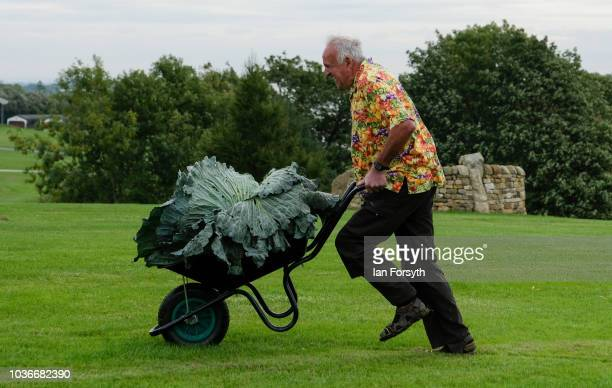 Ian Neale from Newport poses for a media call with his winning cabbage which won with a weight of 302kg after judging takes place for the giant...