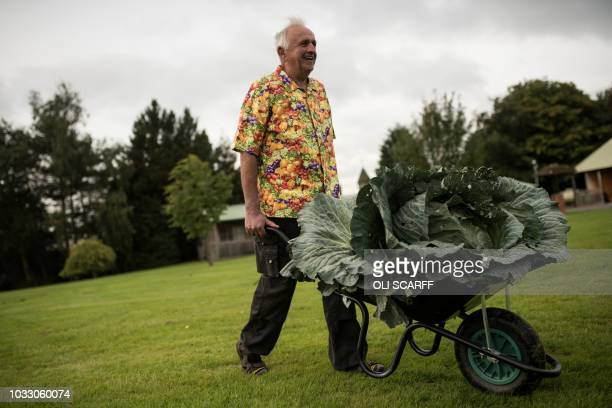 Ian Neale transports his 302 kg cabbage which won the the heaviest cabbage competition on the first day of the Harrogate Autumn Flower Show held at...