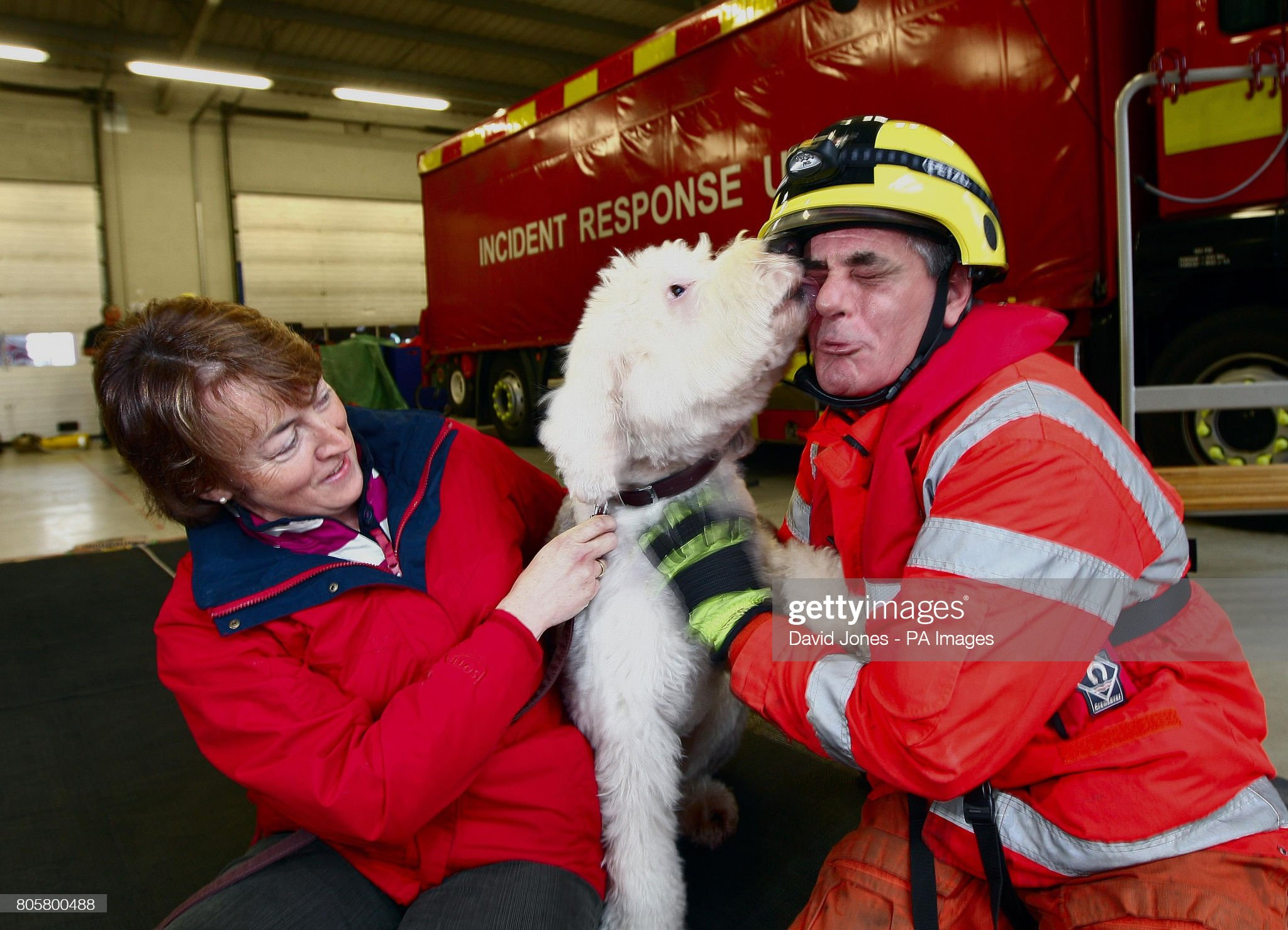 Dog rescued from lake : News Photo