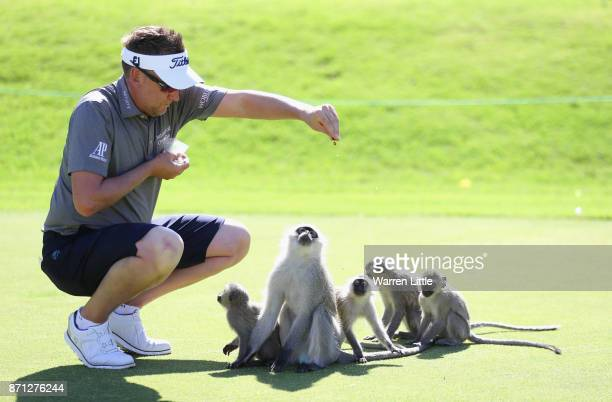 Ian Poulter of England feeds the monkeys on the range at the Lost City ahead of the Nedbank Golf Challenge at Gary Player CC on November 7 2017 in...