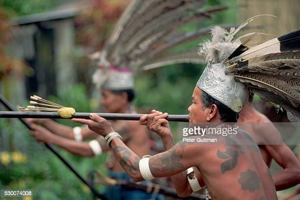 Iban Warrior Shooting Blowgun