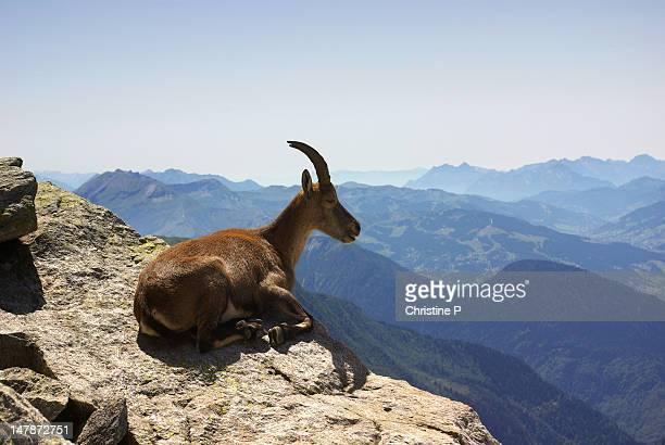 ibex in black lake - alta saboya fotografías e imágenes de stock
