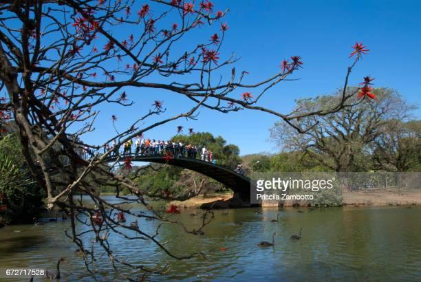 Ibirapuera park lake bridge