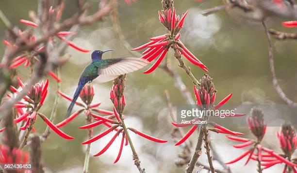 ibirapuera park , sao paulo , brazil - alex saberi foto e immagini stock