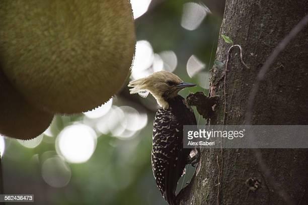 ibirapuera park , sao paulo , brazil - alex saberi stock pictures, royalty-free photos & images