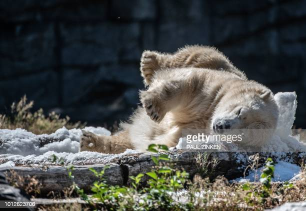 Ice bear Tonja takes an ice bath prepared by her keeper in her enclosure at the zoo in Berlin on August 7 2018 as the heatwave in Europe continues /...