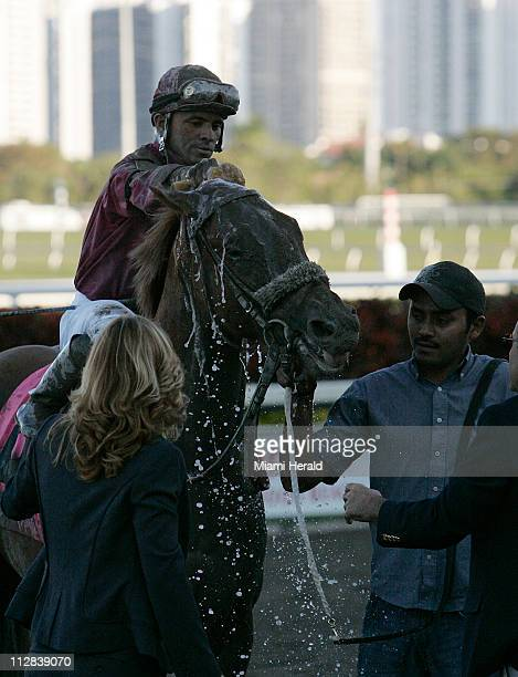 Ice Box gets a refreshing bath from his jockey Jose Lezcano after winning at the Florida Derby at Gulfstream Park in Hallandale Beach Florida on...