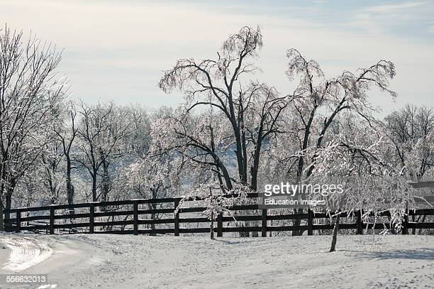 Ice covered trees after a winter storm in Kentucky USA