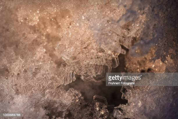 Ice crystals growing on trees