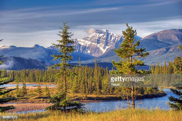 ice field parkway - lake louise stock pictures, royalty-free photos & images