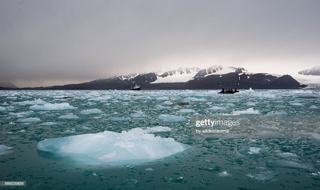 Ice Filled fjord : Stock Photo
