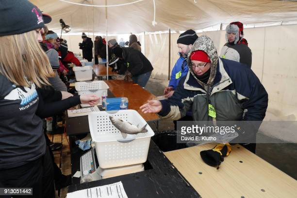Brainerd Jaycees Ice Fishing Extravaganza View of contestant submitting a tullibee fish for weighin during event on Brainerd Lakes Contestants came...