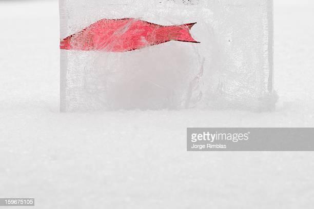 Ice Fish-ing