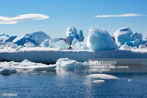ice floe, antarctica - photostock stock pictures, royalty-free photos & images