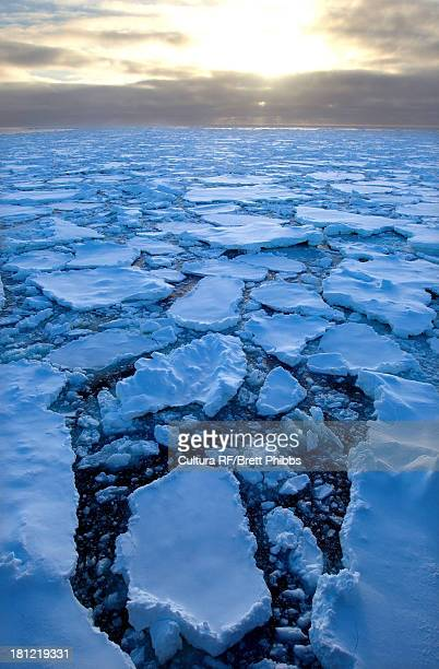 Ice floe in the Southern Ocean, 180 miles north of East Antarctica, Antarctica