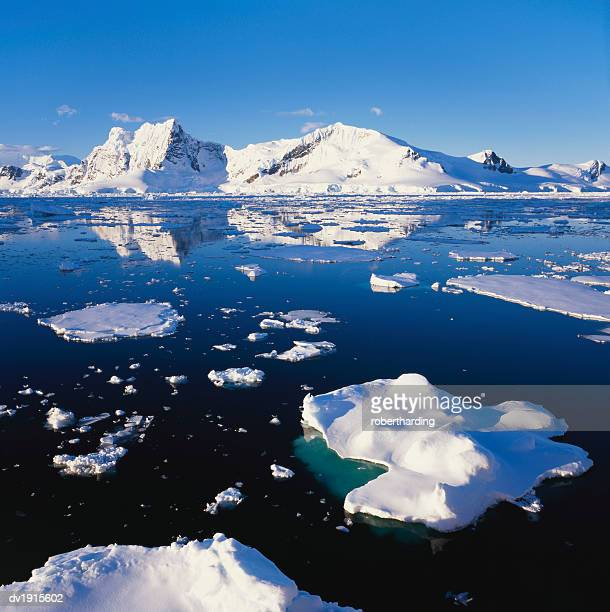 ice floe on the antartic peninsula - peninsula stock pictures, royalty-free photos & images