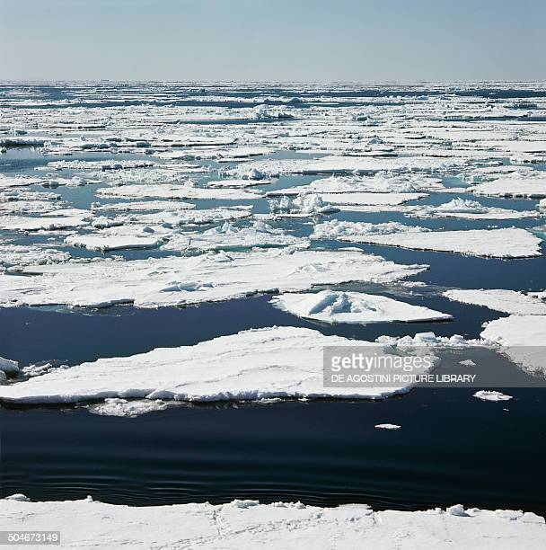 Ice floes floating on water Ross Sea Antarctica